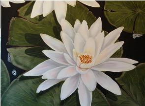 24 x 30 lotus in pond